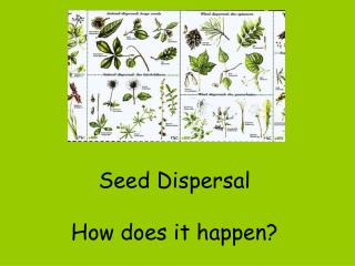 Seed Dispersal How can it happen?