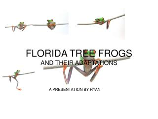 FLORIDA TREE FROGS AND THEIR Adjustments