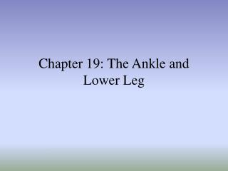 Section 19: The Lower leg and Lower Leg