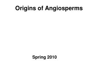 Roots of Angiosperms