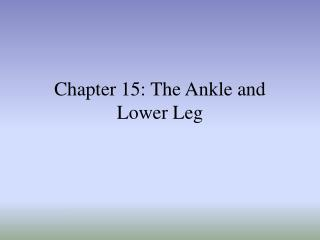 Part 15: The Lower leg and Lower Leg