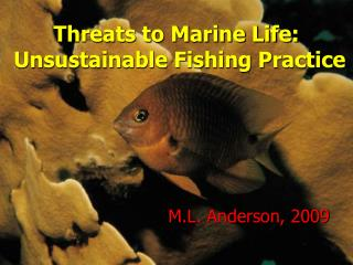 Dangers to Marine Life: Unsustainable Angling Hone