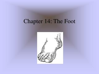 Part 14: The Foot
