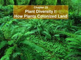 Section 29 Plant Differing qualities I: How Plants Colonized Area