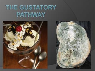 The gustatory pathway
