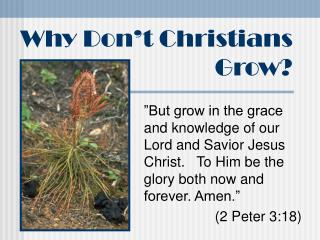 Why Don t Christians Grow