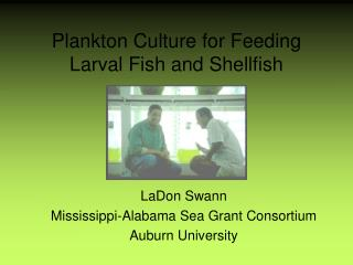 Microscopic fish Culture for Feeding Larval Fish and Shellfish
